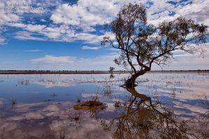 Beauty of the Outback by FireflyPhotosAust