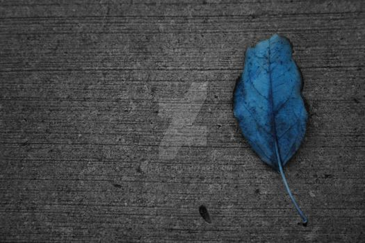 --blue leaf by ewlala