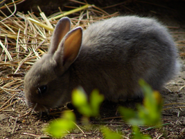 Baby Bunny by chirilas