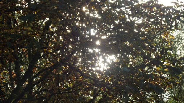 sun beams of autunm by Goth-and-other-stuff