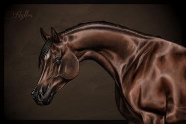 Arabian Horse by a-Astree