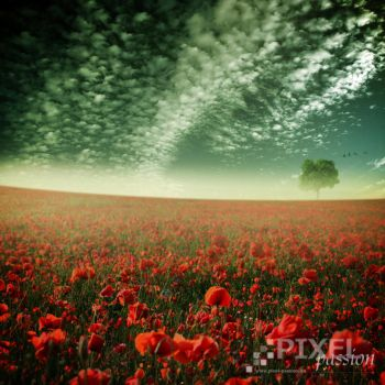 poppy world by Fussel2112