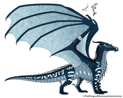 Conidae Reference by Shallowpond