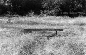 lonely bench by bluegoddess16