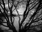 Branching Out by domwlive