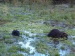 Momma and Baby Beaver by TheSorceressRaven