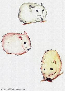cute little hamsters by PatriciaG