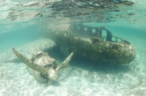 Plane Wreck by leighd