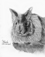 Jersey wooly rabbit by SulaimanDoodle