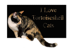 I Love Tortoiseshell Cats by Loulou13