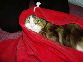 Cat caught up in a red laundry bag by caspercrafts