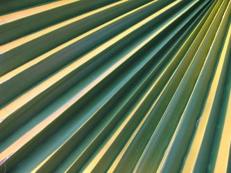 Palm stairway by blagi