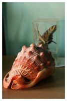 Shell by CurtP