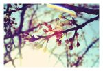 Spring is in the air. by jack22
