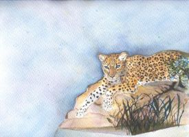 Leopard watching by Syoms