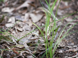 There I met a toad by Mogrianne