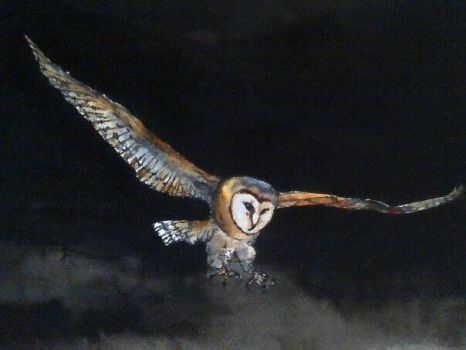 Owl watercolour by Abilaunch