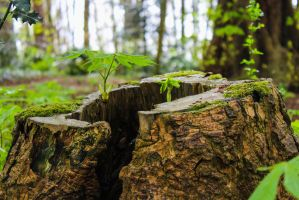 Stump of Life by Blekee