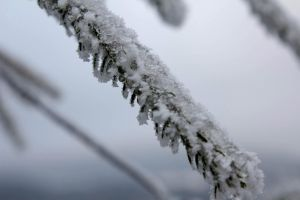 iced and snowed detail from conifer by LoveForDetails