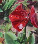 Red Pansy by DollyChippewa