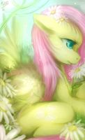 fluttershy by mr-tiaa