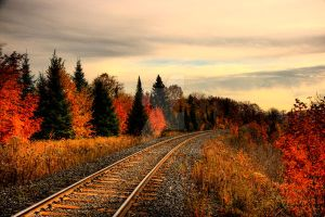 HDR Autumn Tracks by Nebey