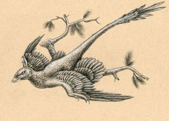 Microraptor by FOSSIL1991