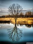 Another reflection by waclawq