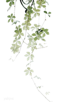 Drawing plant leaves PNG #11 by AugT30