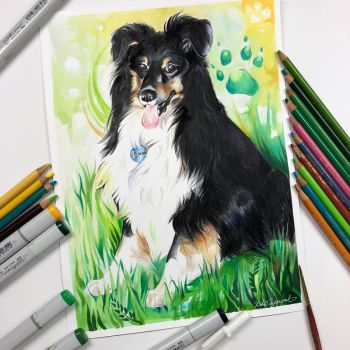 21- Sheltie by Lucky978