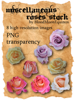 Miscellaneous Roses Stock by BloodMoonEquinox