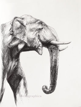 Asian Elephant by Alithographica