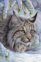 Bobcat Card by Sidonie