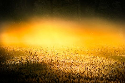 fields of gold by werol