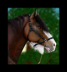 Clydesdale Portrait by Candrence