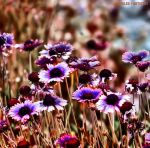 Summer Symphony... by Tigles1Artistry