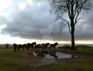 Exmoor Ponies on the Quantocks by artbymikew