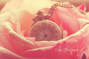Flower Tock by EclipxPhotography