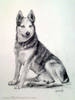 Dog in Charcoal by theportraitart