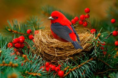 Christmas Colors Of Nature by straylady