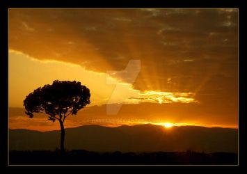 Sunrise Tree by Hassan9