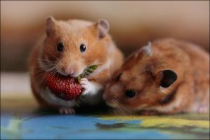 Greedy Hamster by StacyD