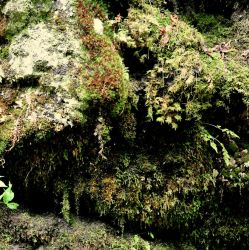 Lichen and Moss by Brian-B-Photography