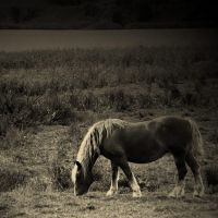 horse by luclak