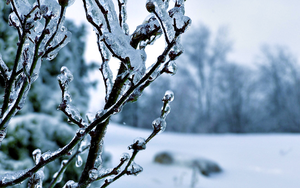 Frozen Tree HD Wallpaper by CurtiXs