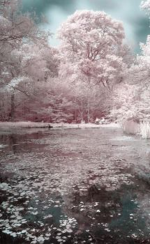 The Couples Pond by wreck-photography