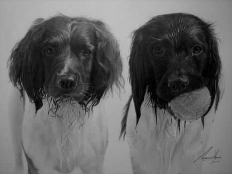 Commission - 2 more Spaniels by Captured-In-Pencil