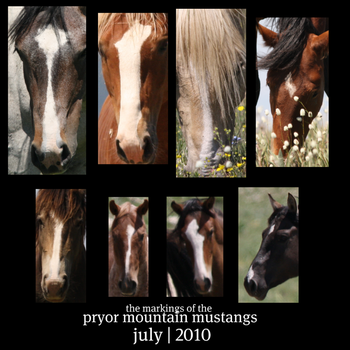 PM Mustang Markings - Faces by verybluebird