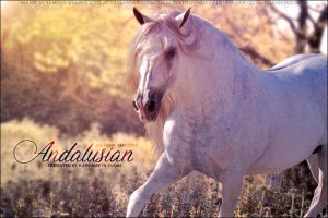 RMF Andalusian by FamousShamus109