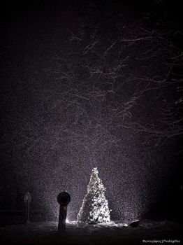 Let it Snow by photogrifos
